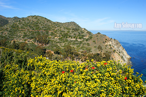 Ziplining in Avalon, California on Catalina Island
