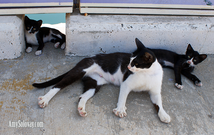 Ashkelon Marina's is home to a number of adorable kittens and cats.