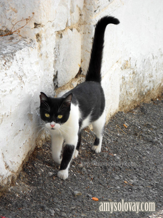 Greek cat spotted on the Greek island of Crete at Agia Galini.