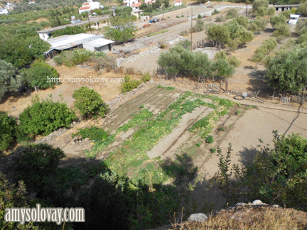 We saw what appeared to be a Greek farm, complete with olive groves, sheep, chickens and other critters.